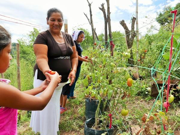 Garden sharing harvest